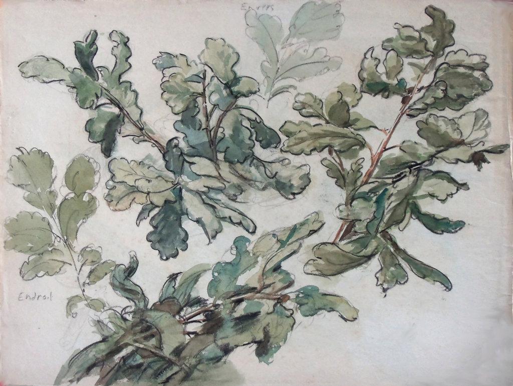 Branches de chène