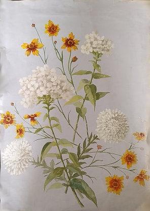 composition-dessinee-de-fleurs-diverses.jpg