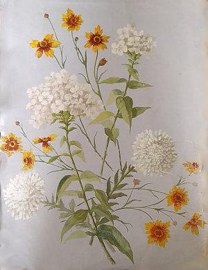 fleurs-eparses.jpg